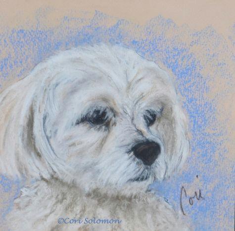 Drawing Of Maltese Dog Maltese Dog Art by Cori solomon Painting by Artist Art Helping