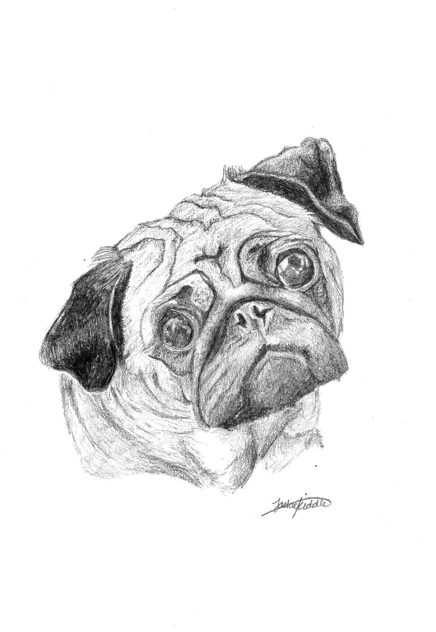pug 25 print art drawing ww petsbypencil co nz my website