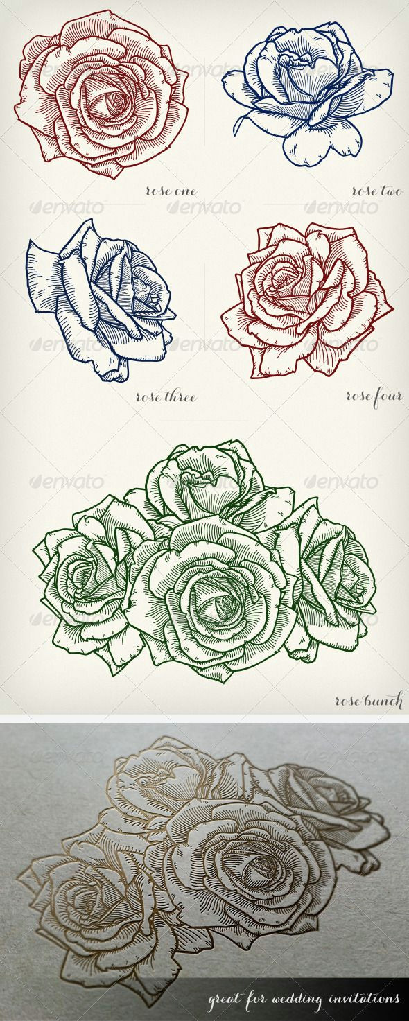 detailed vector roses flowers plants nature