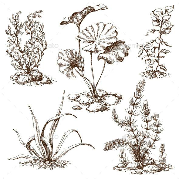 sketch of underwater plants flowers plants nature