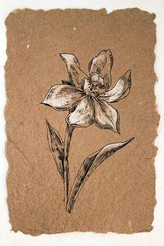 flower drawing white narcissus classis style original artwork botanical art black ink