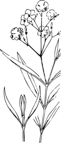 oleander outline clip art at clker com vector clip art online