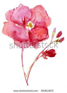 Drawing Of Oleander Flower 31 Best Bunga Images Watercolor Paintings Watercolour Paintings