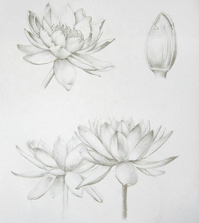 pencil drawings of flowers art drawings drawing flowers leaf drawing sketch drawing