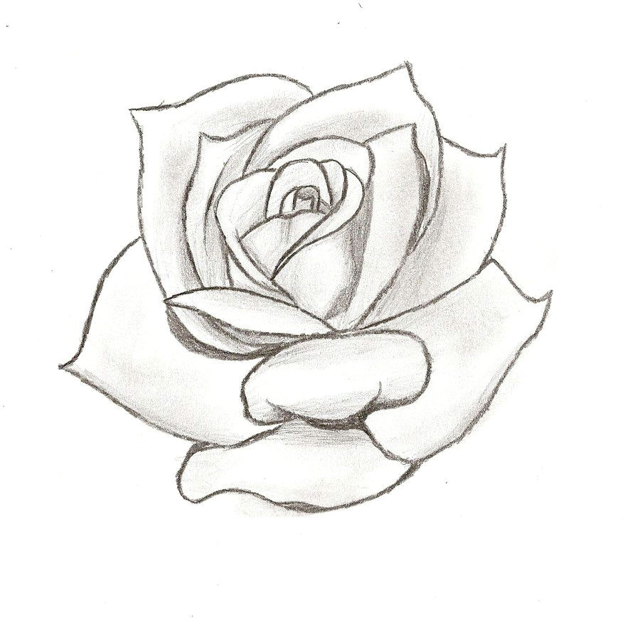 line drawing rose cliparts co