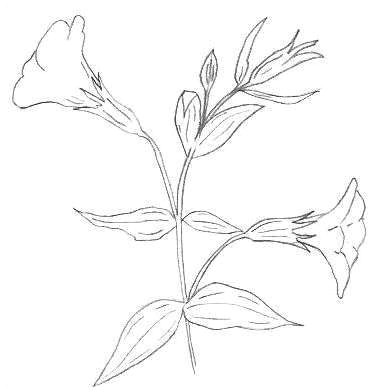easy to draw flowers step by step lovely s s media cache ak0 pinimg originals 0d 1d