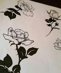 rose drawings rose paintings
