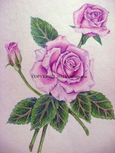 pencil drawings of flowers and butterflies with colours google search pencil drawings of flowers