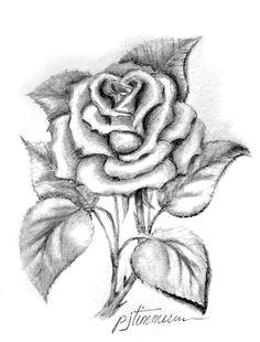 single rose pencil drawing rose sketch rose drawing pencil flower pencil drawings