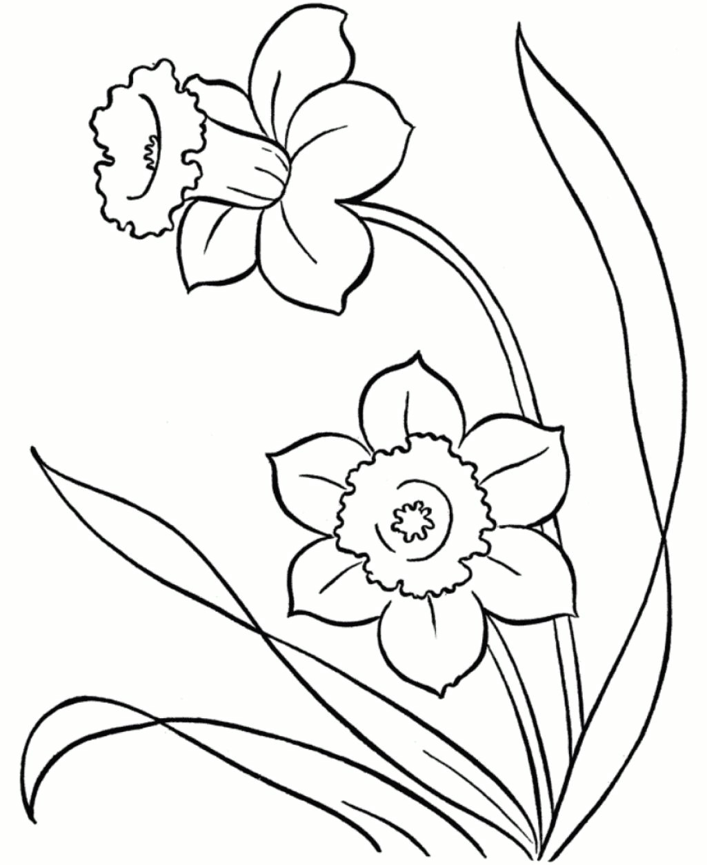 line drawings of snowdrops google search