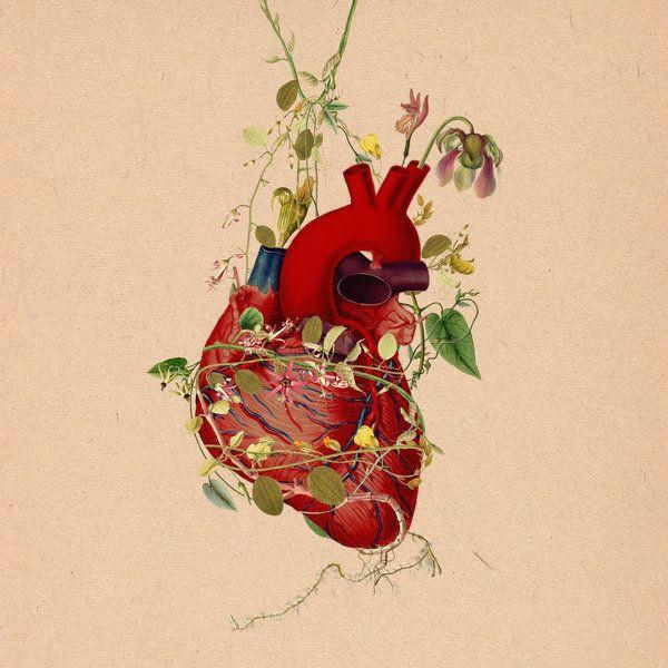 heart muscle entwined botanics