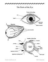 Drawing Of the Eyes and Label 16 Best Model Eye Ball Images Human Eye Eye Anatomy Eyes