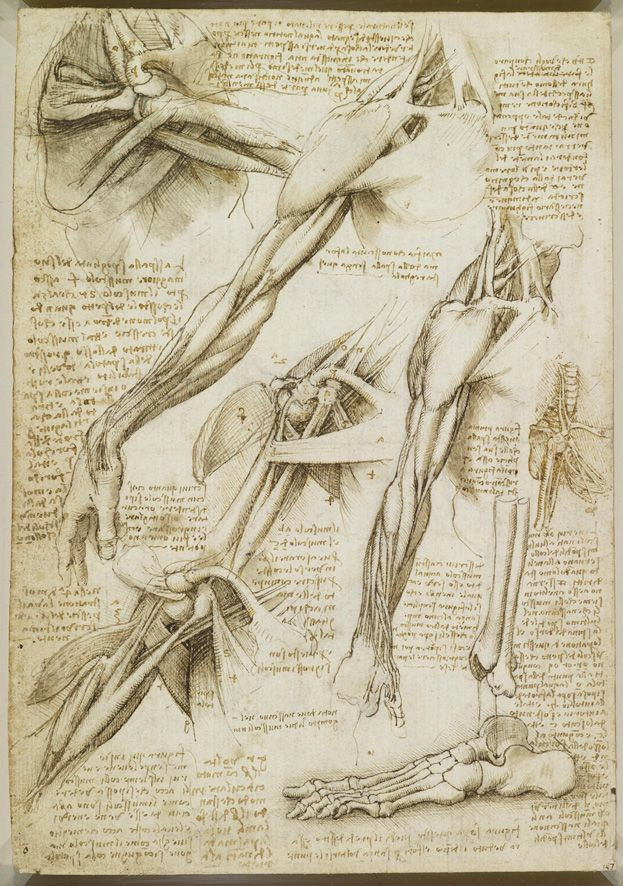 from davinci s anatomical drawings three studies one on a larger scale of a man s right arm and shoulder showing muscles three studies of a right arm