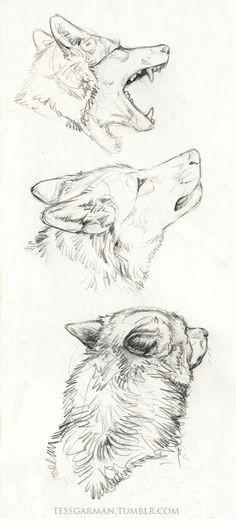 antes habia un perro lobo wolf malen wolf zeichnung zeichenkunst bleistiftzeichnungen skizzierung
