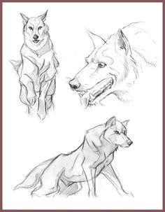 wolf sketches