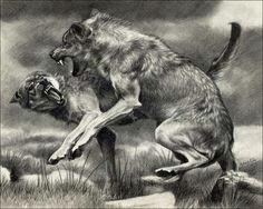 lobos drawing art drawing animals animal drawings pencil drawings art drawings