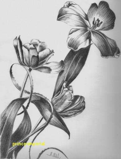 pencil drawing flower vase drawn vase pencil sketch 1h vases flower drawing 5i 0d