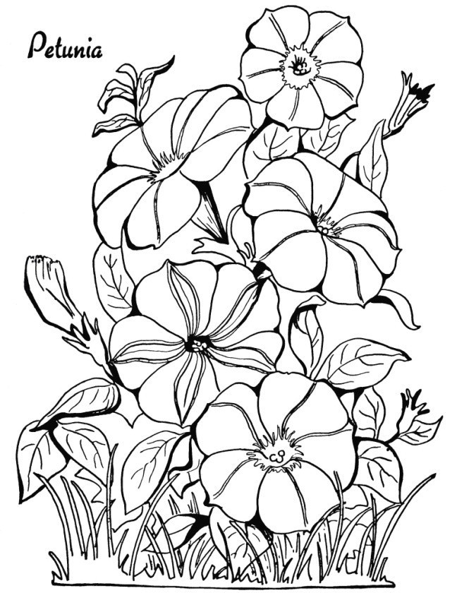 drawing of flowers step by step packed with beautiful awesome cool vases flower vase coloring page