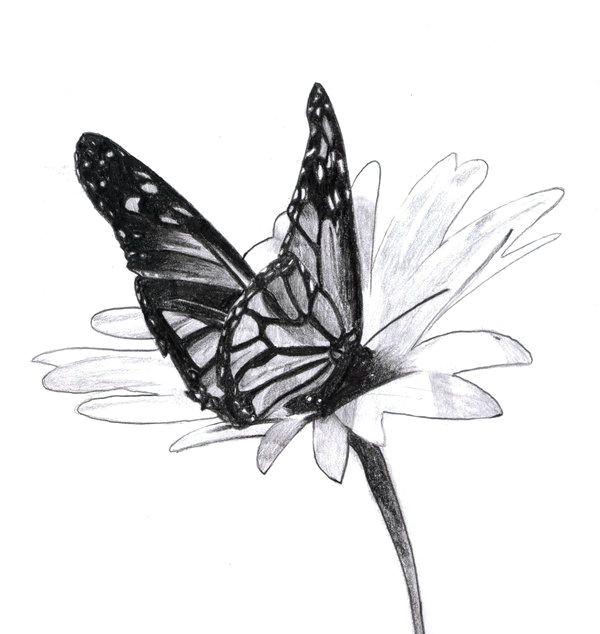 2006 beautiful flower drawings pencil drawings of flowers beautiful butterflies
