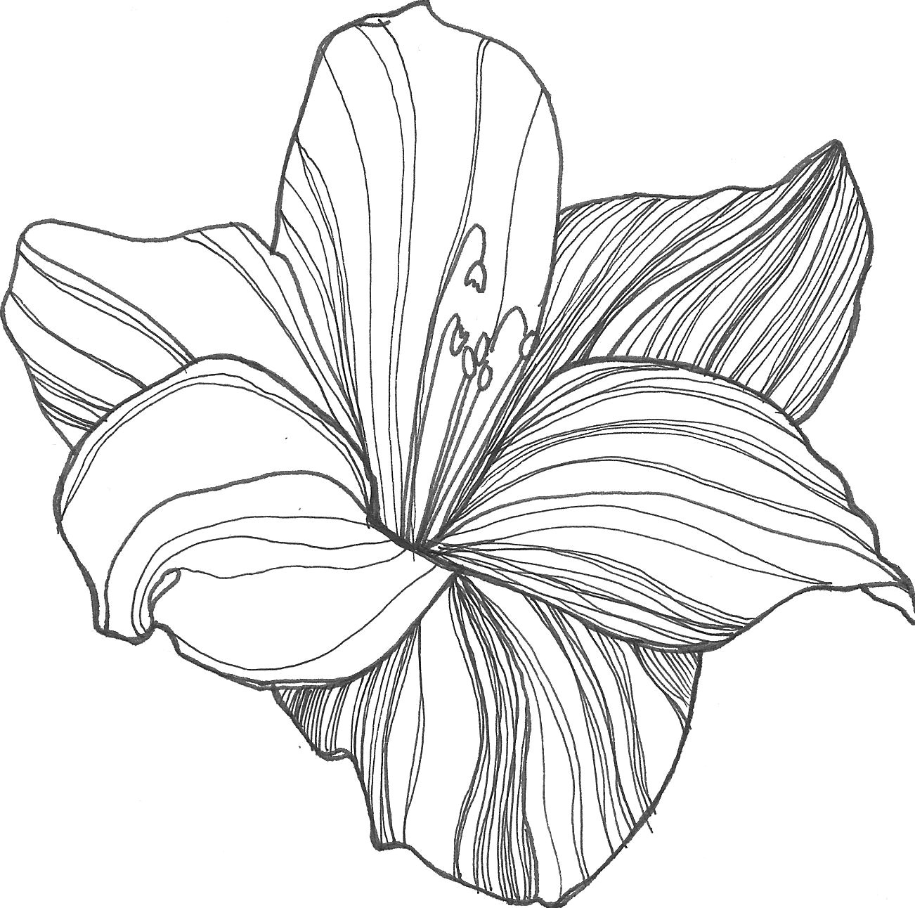 nicole illustration flower power lilly flower drawing lotus flower drawings flower pattern drawing