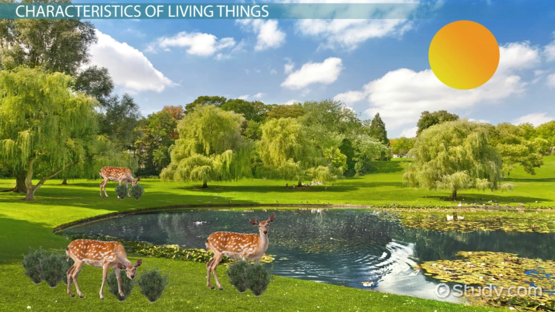 characteristics of living things thumbnail 175311 jpg