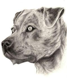 Drawing Pitbull Dogs 31 Best Pitbull Images Drawings Pitbull Drawing Art Drawings