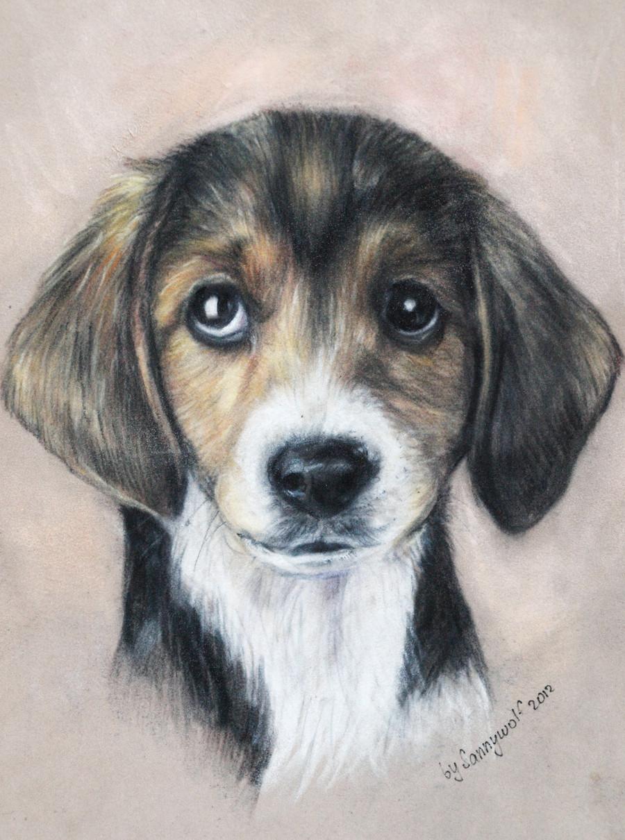 puppy eyes by sanny wolf