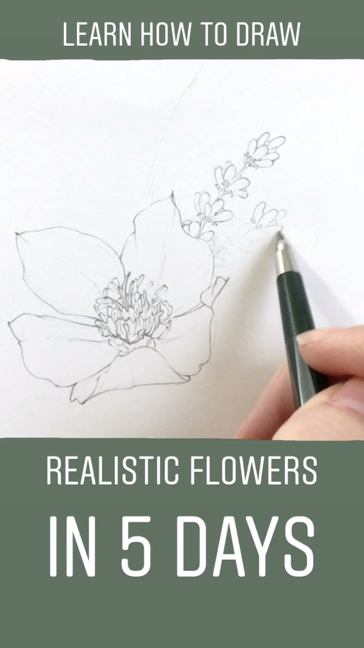 learn how to draw realistic flowers in less than one week join me and hundreds