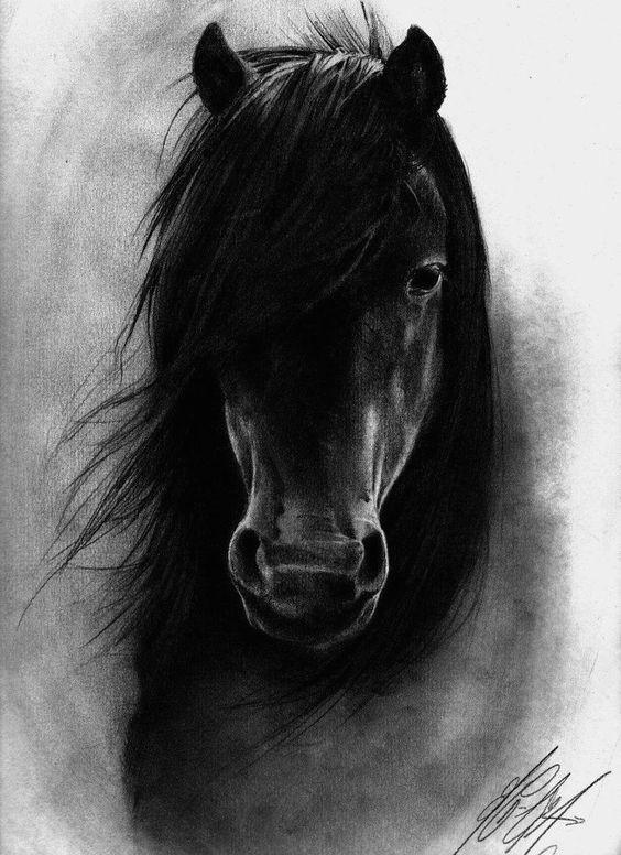 horse coal drawing