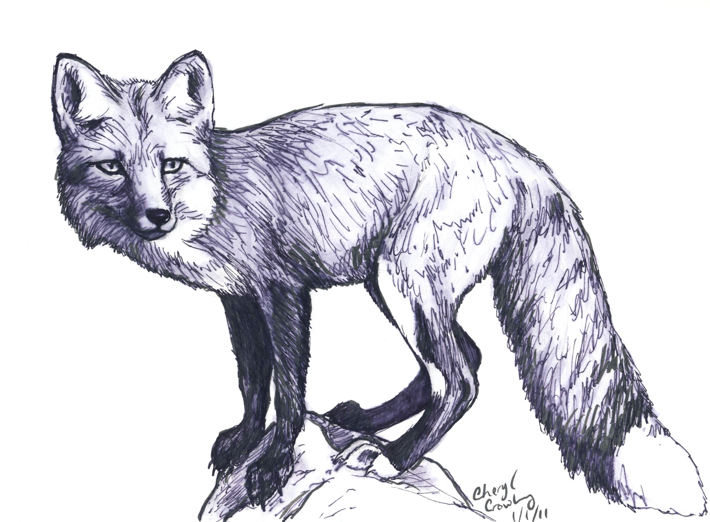 red fox sketches google search fox sketch fox tattoo croquis pencil art
