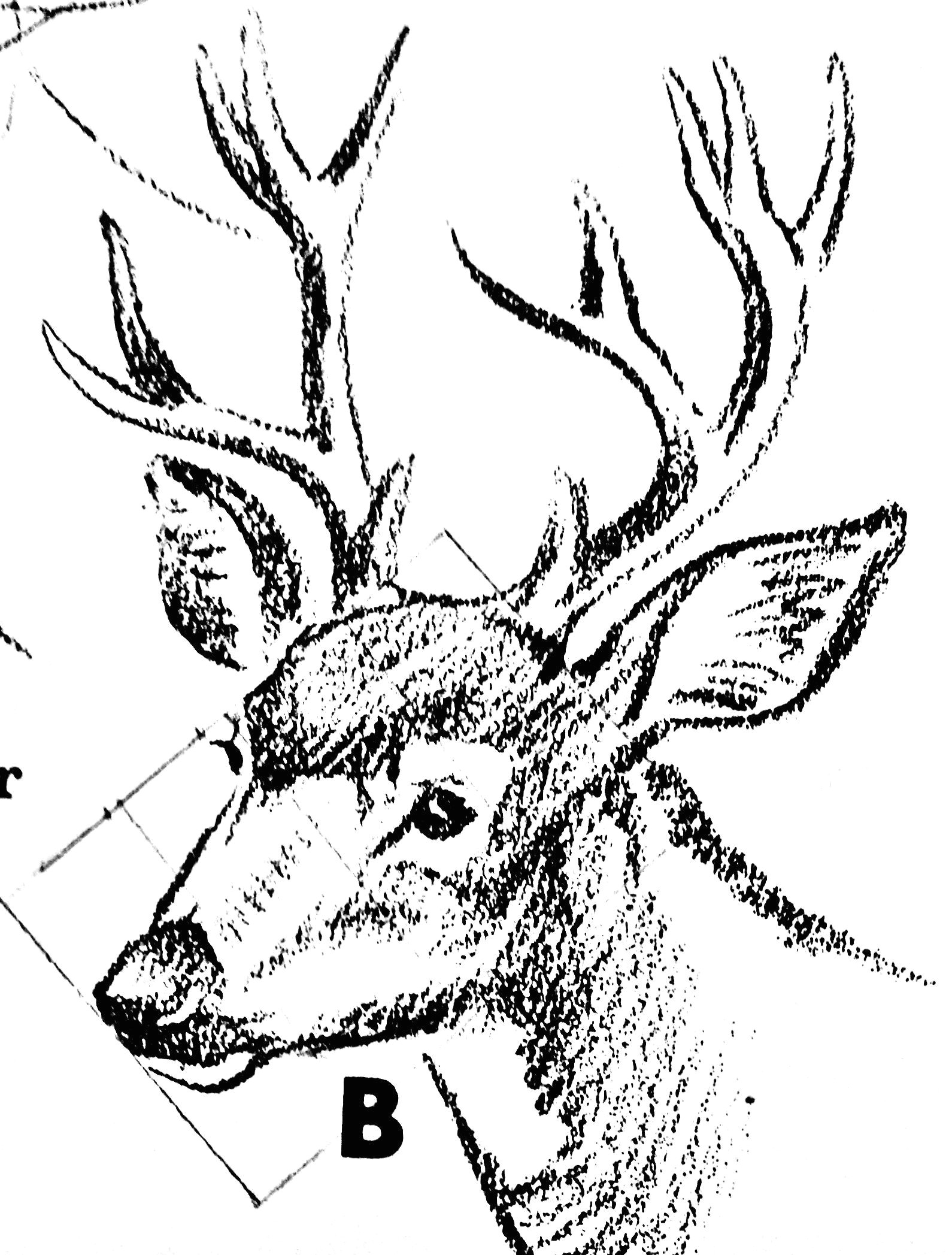 animal drawings moose art pieces deer artworks sketches of animals