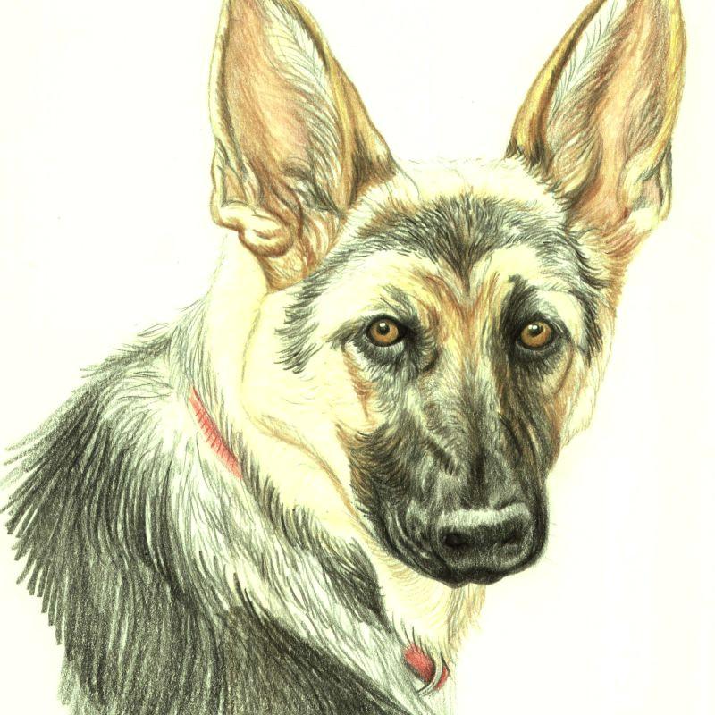 drawing hair and fur