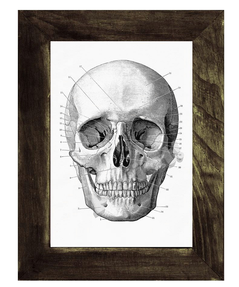 human skull print in black science prints wall art by prrint 8 99