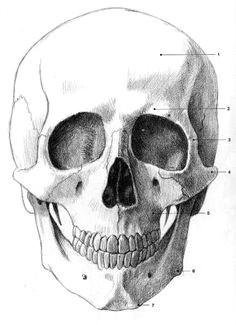le visage en bande dessinee anatomie et expressions petre sbera a drawing human faces