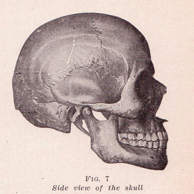 skull side view by perpetualplum via flickr