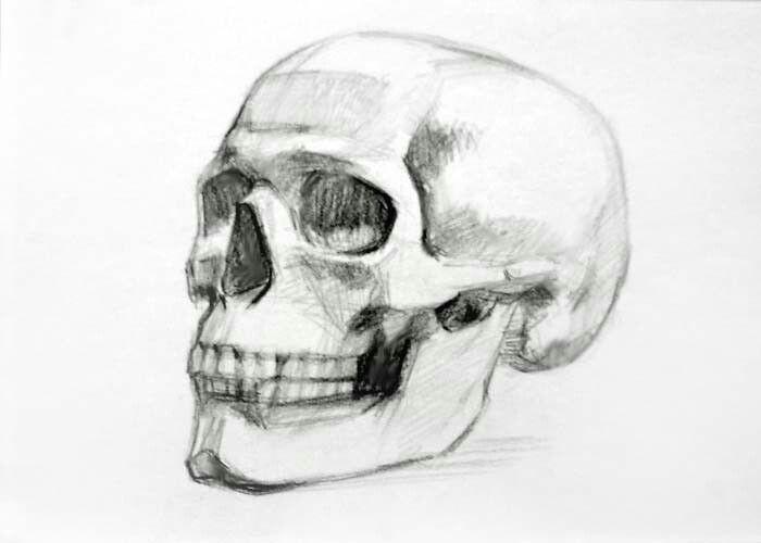 Drawing Skulls Tutorial Skull Drawing Art Drawings Skull Sketch Art