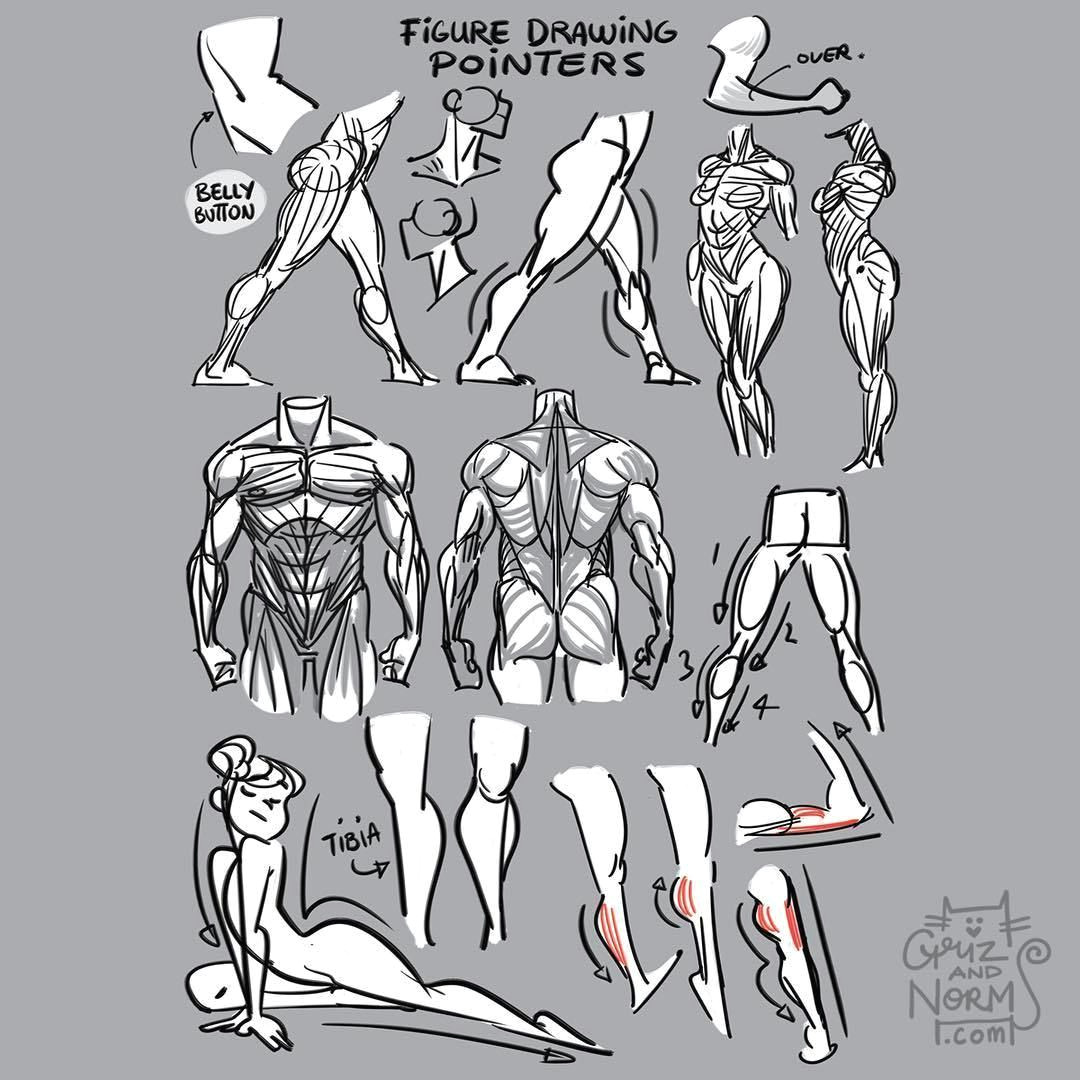 tuesday tips figure drawing pointers a few things i keep in mind while i m figure drawing from small details that suggest form and volume to larger