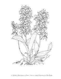 gallery ru d d n d 2 great flower prints lenadep