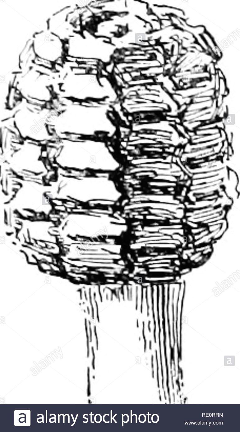 cyclopedia der amerikanischen gartenbau bestehend aus anregungen fur den anbau von gartenpflanzen beschreibungen