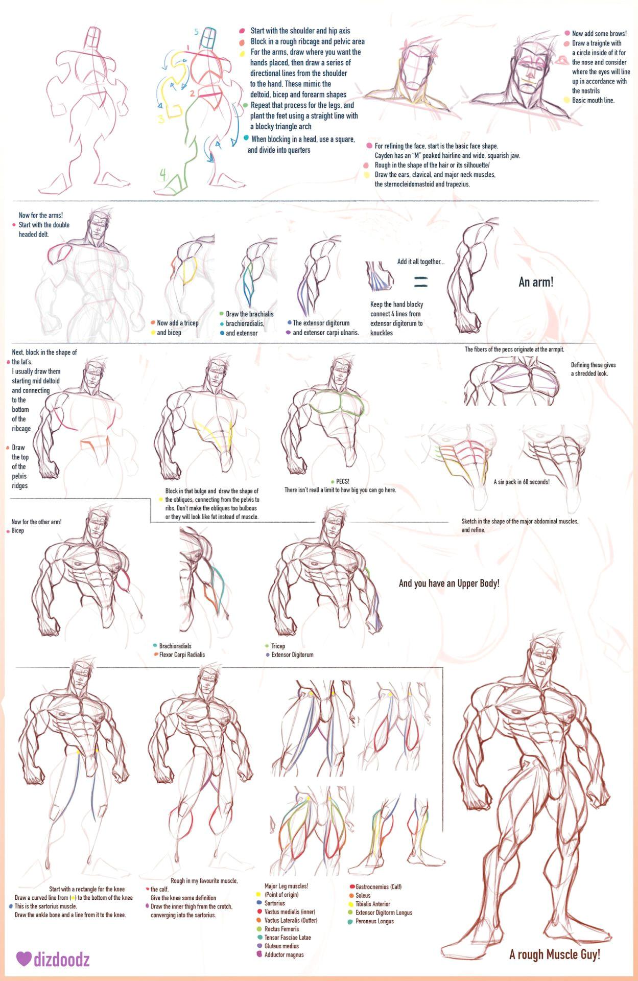 anatomy tutorial gesture drawing figure drawings anatomy reference drawing people art