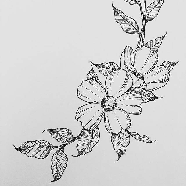 wild flower wednesdays