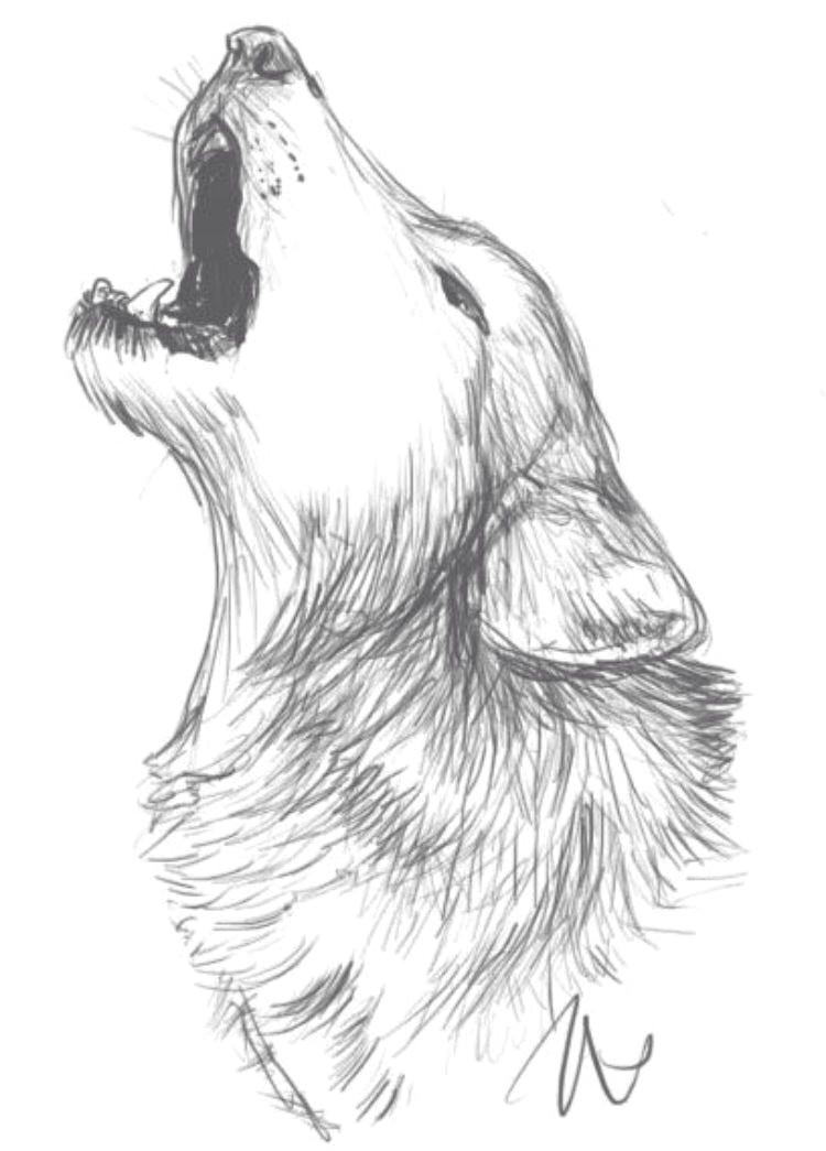 pinterest zeichnungen bleistift nouveau photographie wolf drawing idea zeichnen pinterest