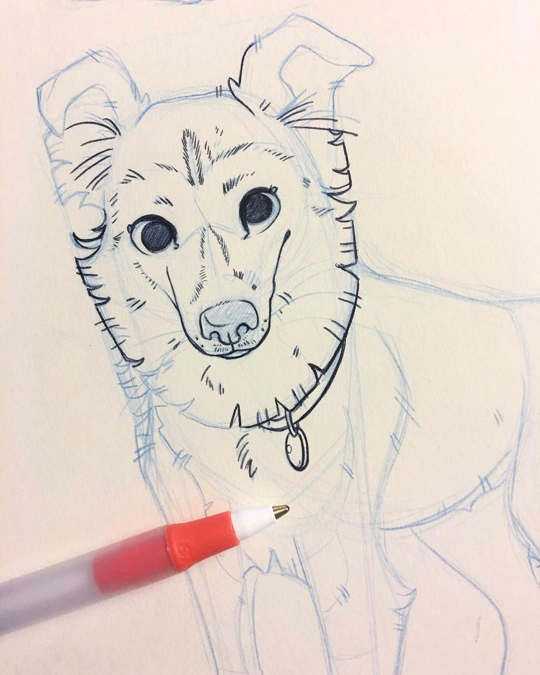 making up a new pet portrait for salt lake city comic con this one will be a colored example i think pets dogs dogsofinstagram art artist drawing