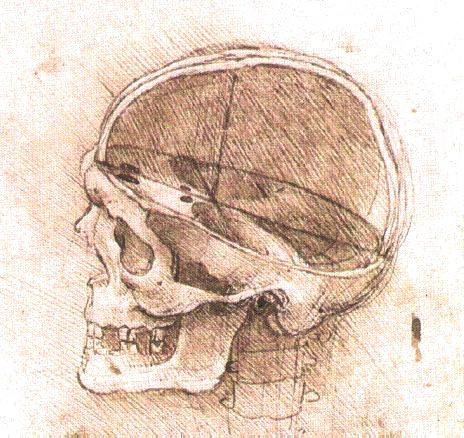 file view of a skull ii jpg