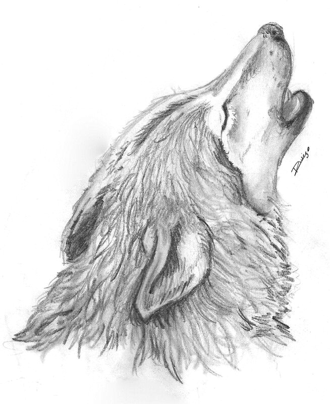 creature drawings animal art wolves wolf drawings art background kunst animaux a wolf