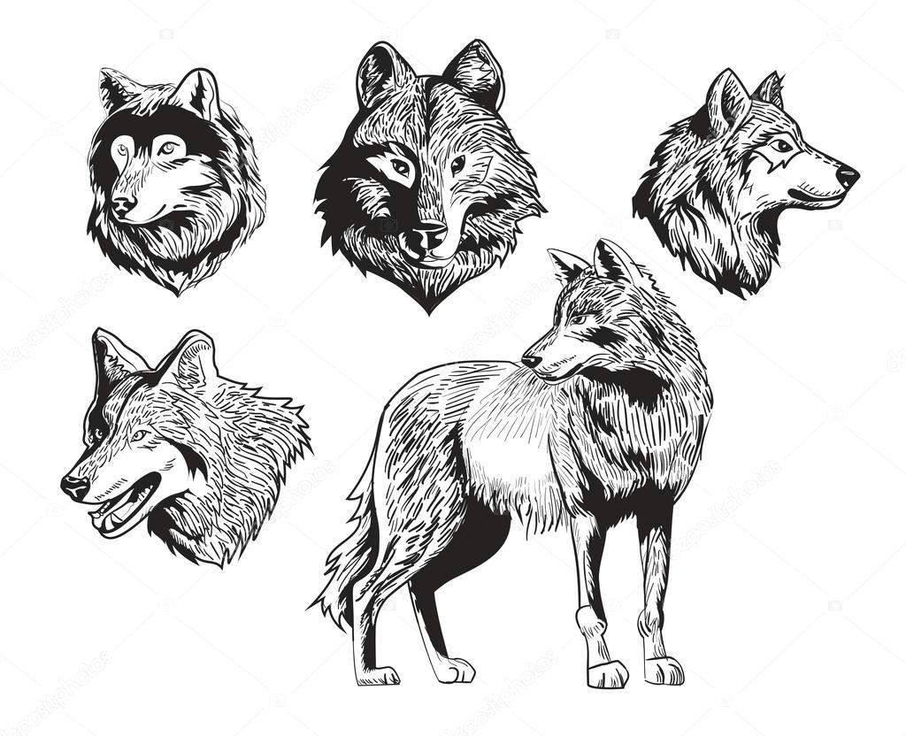 vector illustration sketch drawing wolf silhouette set on white background wektor od sergeygerasimov