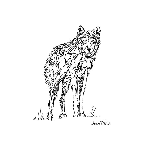 wolf drawing gray wolf illustration timber wolf black and white wildlife drawing
