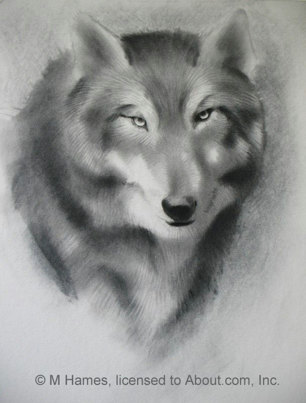wolf4 56a26dbe5f9b58b7d0ca3127 jpg