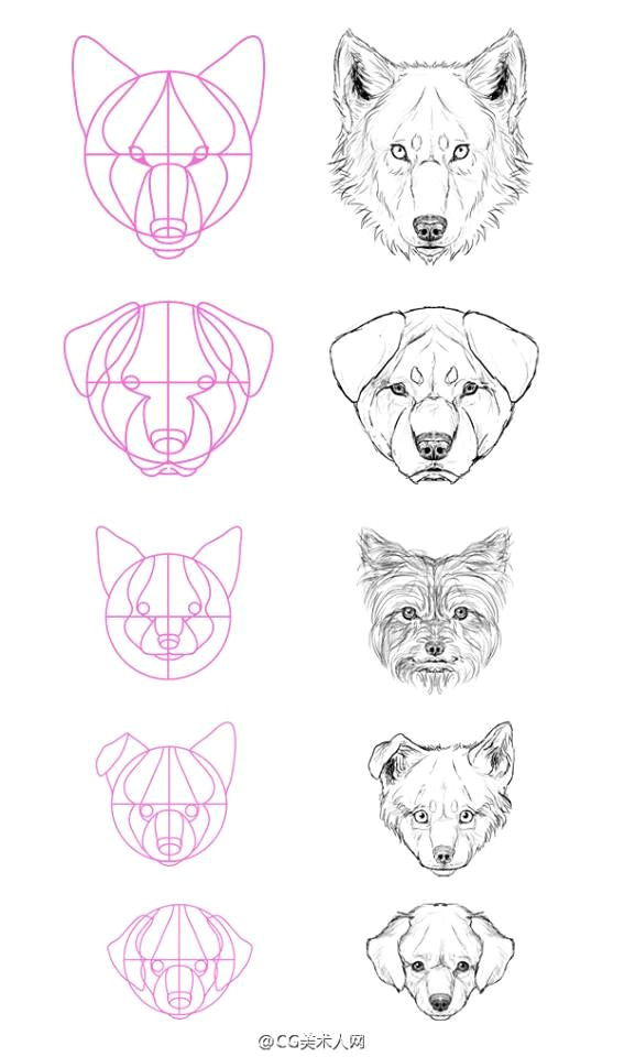 dog face drawing wolf head drawing mouth drawing puppy drawing how to