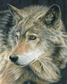 curious eyes by carla kurt